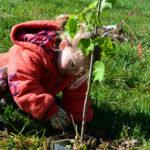 Marylanders Plant Trees Coupon Program